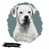 American Bulldog puppy digital art illustration isolated on white background. American Bulldog, Standard and Classic breed of utility dog. Stocky strong-looking dog with large head and muscular build. poster