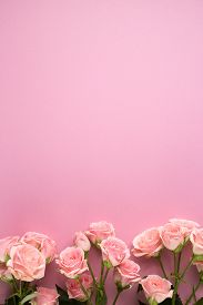 Pink Rose Flowers On Pastel Pink Background. Flat Lay