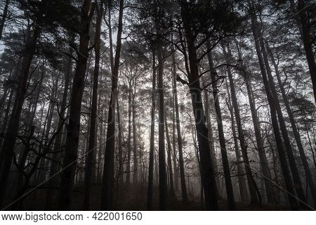 Low angle of scenery of leafless trees growing in woods in misty morning