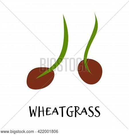 Vector Illustration Of Wheatgrass In Hand Drawn Flat Style. Doodle Fresh Healthy Food