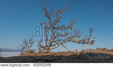 A Leafless Tree Stands Against The Blue Sky. The Twisted Branches Are Tied With Multi-colored Ritual