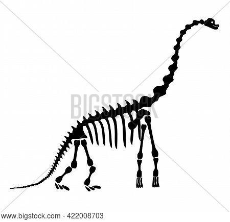 Diplodocus Skeleton. Ancient Prehistoric Animal Dinosaur. Big Animal Of The Prehistoric Mesozoic Era