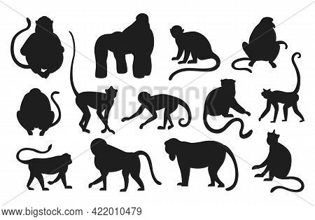 Monkeys Silhouette. Hanging And Jumping Black Apes. Various Types Of Primates. Exotic Animals Set. E