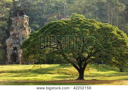 Large tree and Prasat Suor Prat temple, Angkor Thom, cambodia