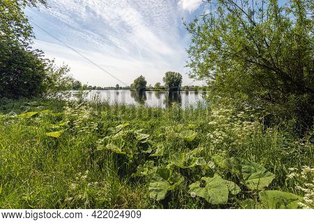 Glimpse At A Dutch Lake In The Spring Season. In The Foreground, Butterbur And Wild Carrot Grow Amon