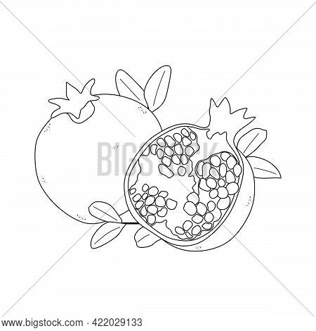Illustration Vector Of Pomegranate Fruit. Pomegranate Line Icon. Suitable For Coloring Book