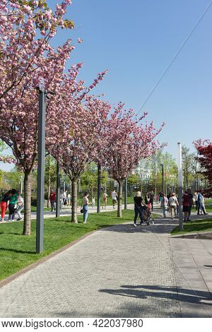 Krasnodar, Russia-may 02, 2021: Beautiful Avenue With Cherry Plum Blossoms. People Walk In A Well-ma