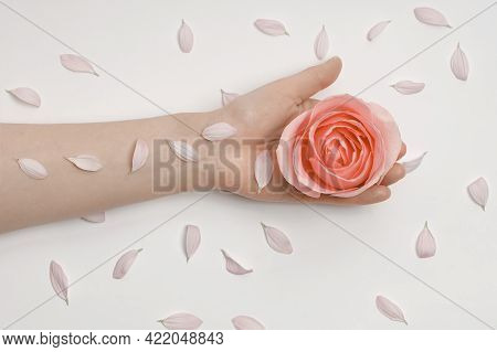 Hand Holds A Flower Bud With Petals On A White Background .anti-wrinkle Hand Cosmetics