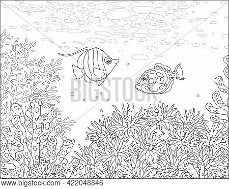 Exotic Small Fishes Swimming Over An Amazing Coral Reef In A Tropical Southern Sea, Black And White