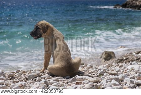 Cute Puppy On The Blue Sea Shore On A Sunny Day In Summer
