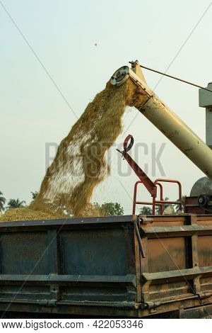 Cutting And Threshing Of Raw And Ripe Paddy Which Automatically Packs The Paddy And Separates The St