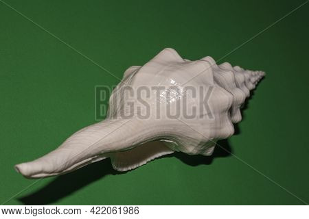 White Oblong Seashell On Green Background Close Up