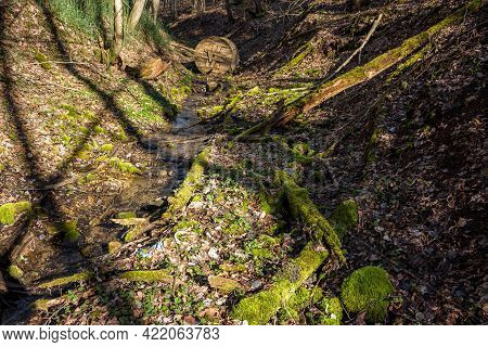 The Bottom Of A Ravine Littered With Dead Wood Covered With Green Moss And Various Debris
