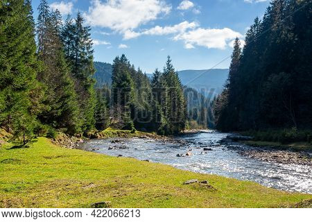 Landscape With River In Mountains. Nature Scenery With Spruce Trees On The Grassy Shore. Stones In T