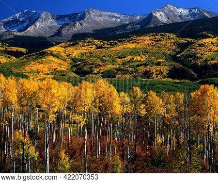 Autumn, Kebler Pass, Gunnison National Forest,  Colorado