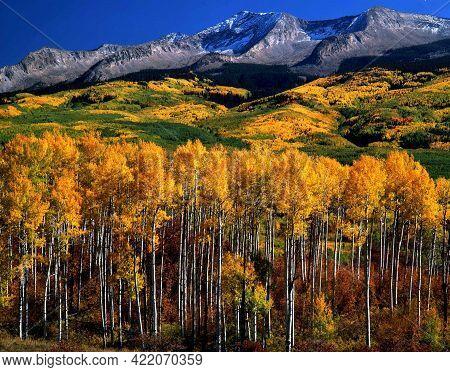 Autumn, Kebler Pass. Gunnison National Forest, Colorado.