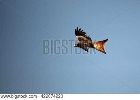 The Golden Eagle (aquila Chrysaetos) Flying Ower The Rocks. Brown And Green Background. Golden Eagle
