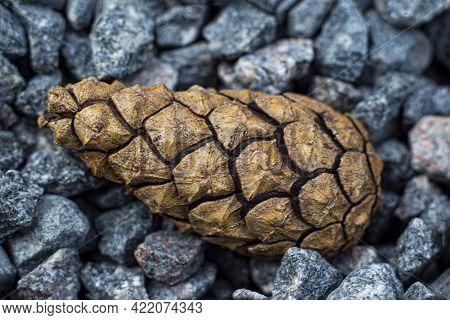 Brown Pinecone In The Stones, Macro, Soft Focus