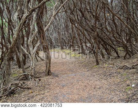 Coastal Bushland Walking Trail Above Norman Beach - Wilsons Promontory, Victoria, Australia