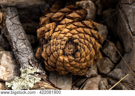Pine Cone Tucked Into Rocks In Guadalupe Mountains National Park