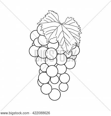 Illustration Vector Of Grape Fruit. Grape Line Icon Isolated On White Background. Grape Symbol. Suit
