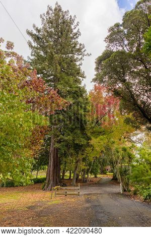 Pathway Under Large Autunm Trees At Marton Park New Zealand.