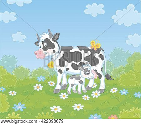 Happy Spotted Cow And A Cute Little Calf Drinking Milk On Green Grass Of A Summer Field With Flowers