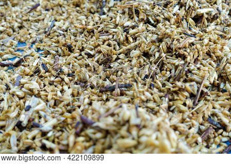 A Close Up Shot Of Wheat Germ And Bran Left After Processing.