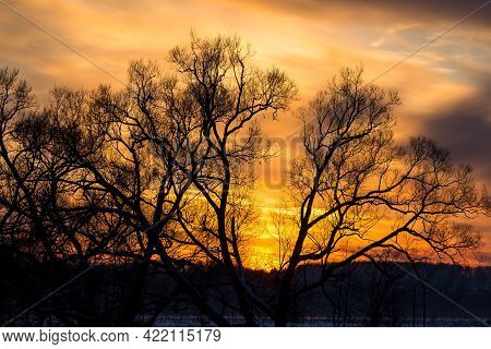 Colorful Beautiful Sunset Behind The Crowns Of Trees In Winter