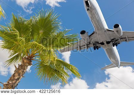 Tropical Palm Tree and Passenger Airplane In Landing Approach.