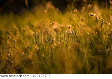 Blurred Background With Grass In A Wild Field