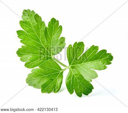 Parsley Isolated On White Background. Fresh Parsley. Leaf Of Parsley.