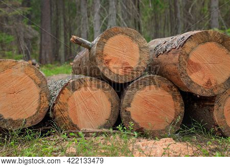 A Sawn Tree In The Forest, Logging, Deforestation, Round Logs Lie In A Clearing, Respect For Nature
