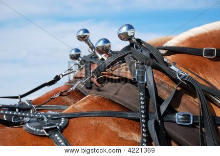 Draft Horse Harness