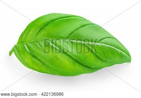Fresh Basil Leaf Isolated On White Background, Close Up. Basil Herb  Top View