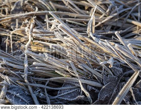 Close-up Of Dry Grass In A Spring Field Covered With Frost. Morning, Hay, Background, Frost