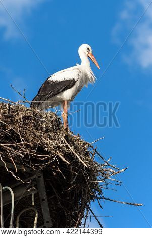 Stork On Nest Against Blue Sky, White Stork Stands At Its Home. Vertical View Of Wild Stork Living I