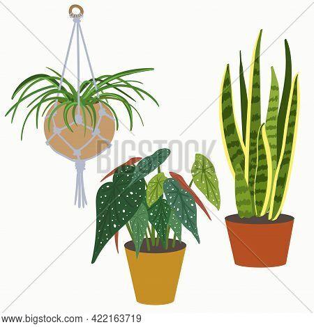 Chlorophytum, Sansevieria, Begonia Maculata. Set Of Hand Drawn Home Plants. Vector Illustration.