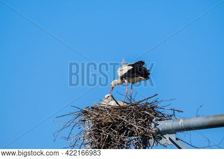 Graceful stork standing in nest with small nestling on background of blue sky