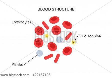 Human Blood Cells Structure Under Microscope. Thrombocytes, Leukocytes And Erythrocytes. Microbiolog
