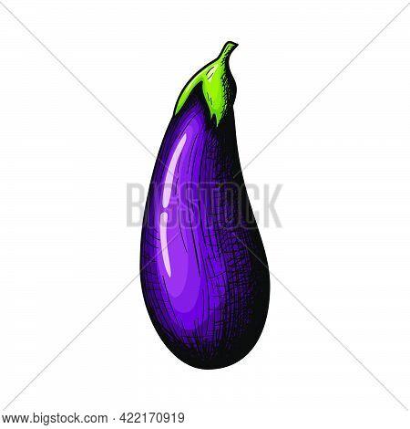 Eggplant Icon. Hand Drawn Sketch Design. Vector Illustration.