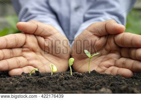 Ideas About Growing Plants And Plants. Trees Growing In Fertile Soil, Respectively, The Germination