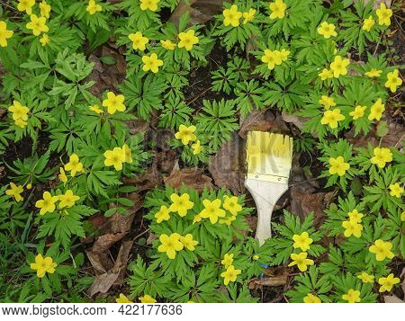 Brush With Yellow Paint And Anemone Ranunculoides, Yellow Anemone, Yellow Wood Anemone, Selective Fo