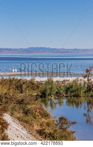 Usa, Ca, Salton Sea - December 28, 2012: Portrait Of Scenery On Nw Shoreline With A Creek And Green