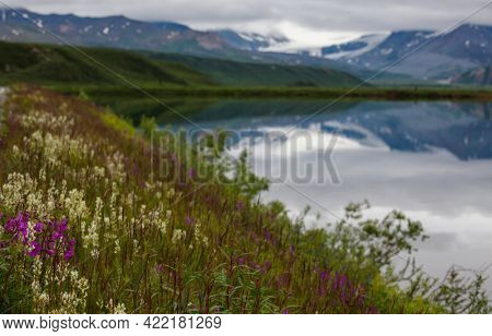 Beautiful wildflowers on a green meadow in summer season. Natural background. soft focus