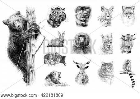 Hand Drawn Set Of 14 Animals, Sketch Graphics Monochrome Illustration On White Background (originals