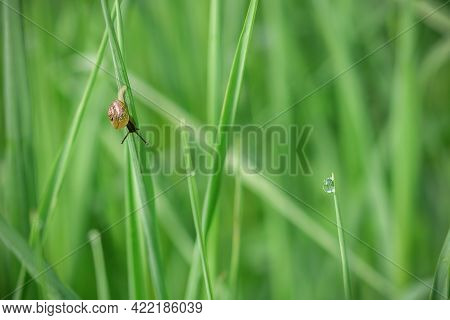 A Small Black Snail On A Green Leaf Against A Background Of Bright Green Grass