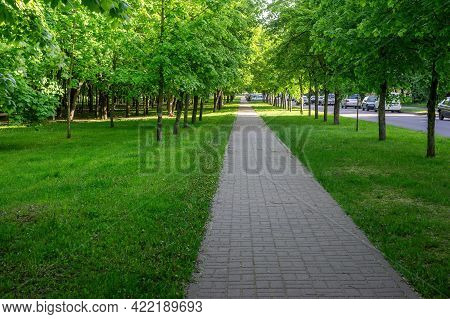 A Pedestrian Path Paved With Paving Slabs Running Along The Road Among The Trees In A City Park