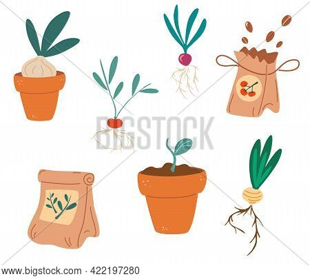 Set Of Seedlings. Seeds, Fertilizers, Seedlings, Pot With Sprouts, Root Crops. Growing Plants In Con