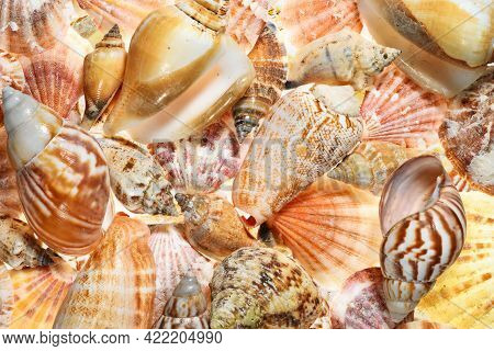 Full Frame Abstract Aquatic Background With Many Different Shells Of Mussels And Snails With Intense